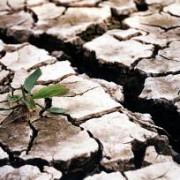 peste 30 din terenurile agricole compromise de seceta