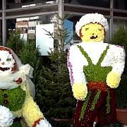 sute de producatori de flori la simfonia lalelelor