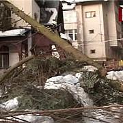 o casa din sinaia distrusa de un molid