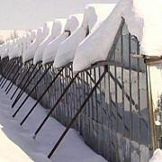 ajutoare pentru producatorii de legume care au fost afectati de zapada