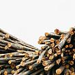 parcul natural apuseni a cazut prada hotilor de lemne