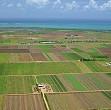 reguli noi pentru vanzarea terenurilor agricole