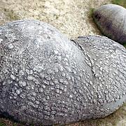 trovantii pietrele vii si scheletul hiperborean de la rosia montana