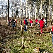 tinerii social-democrati au plantat 900 de copacei la baicoi