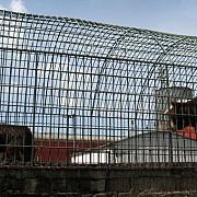 ursii crescuti ilegal in covasna vor fi mutati in rezervatia libearty din zarnesti