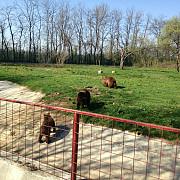 rudele lui nutu camataru la zoo ploiesti video