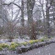 ninsori viscolite si polei in mai multe zone din tara