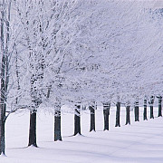 iarna care vine va fi cea mai rece din ultimii 100 de ani