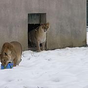 intrare gratuita la zoo ploiesti
