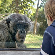 vanatoarea circul si gradinile zoologice interzise