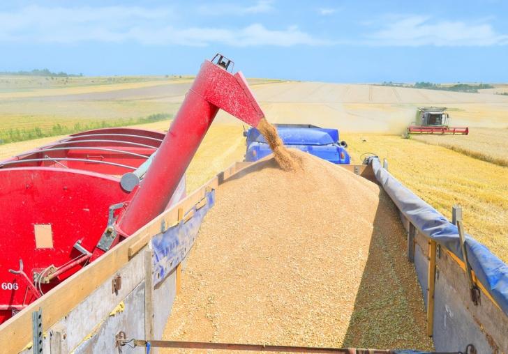 romania redevine granarul europei productia de cereale a crescut spectaculos in 2017