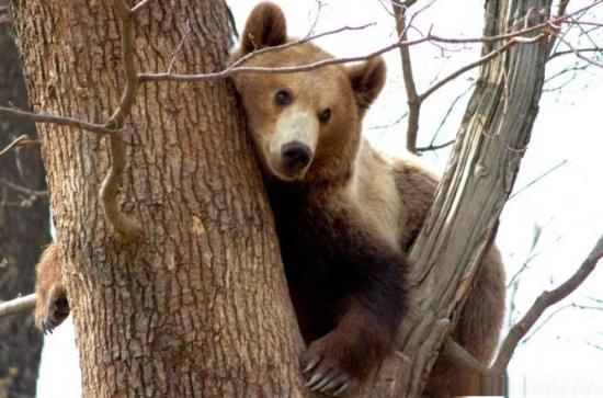 europarlamentarul adina valean dupa ce ministrul mediului a vorbit despre un ordin privind vanarea ursilor